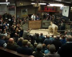 Selby Livestock Auction Market, Selby, North Yorkshire